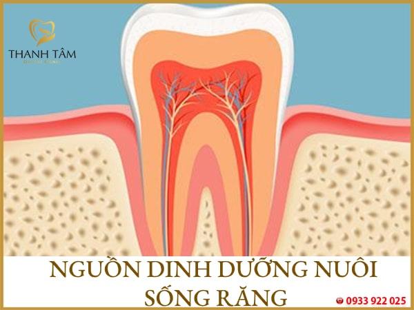 Phương pháp lấy tủy răng