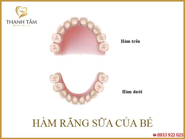 răng hàm sữa