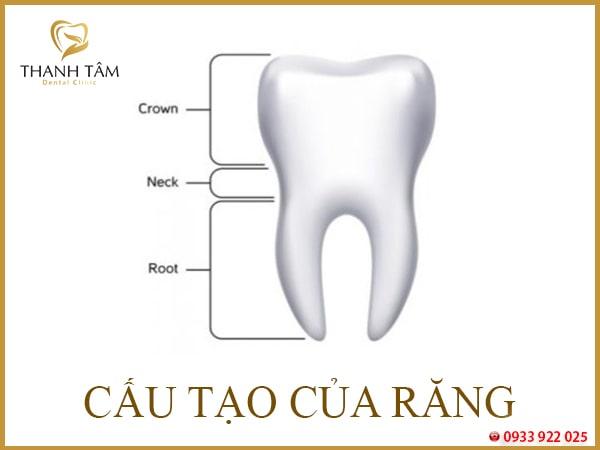 răng số 2