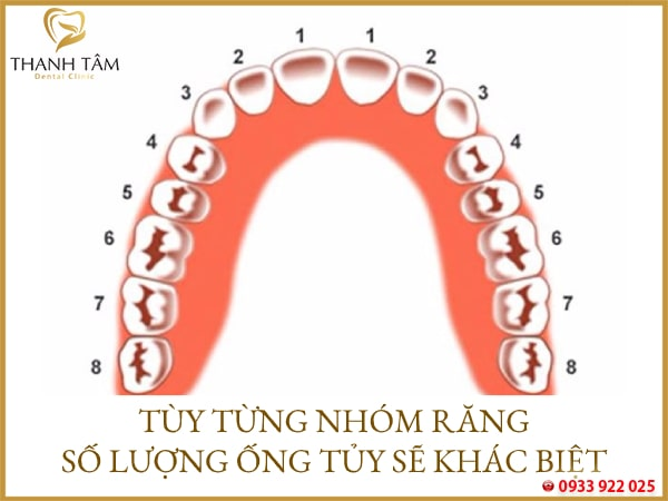 Số lượng ống tủy của răng