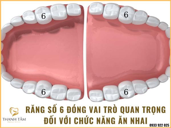 răng số 6