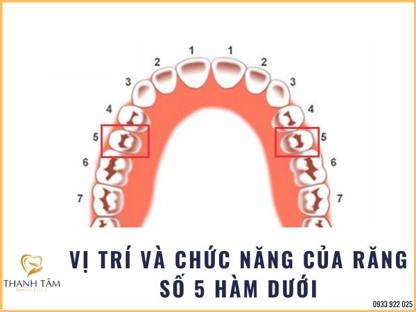 Răng số 5