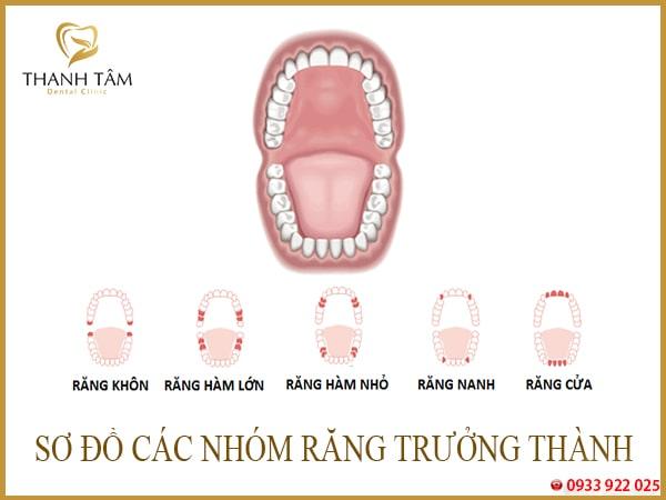 Ê buốt răng hàm